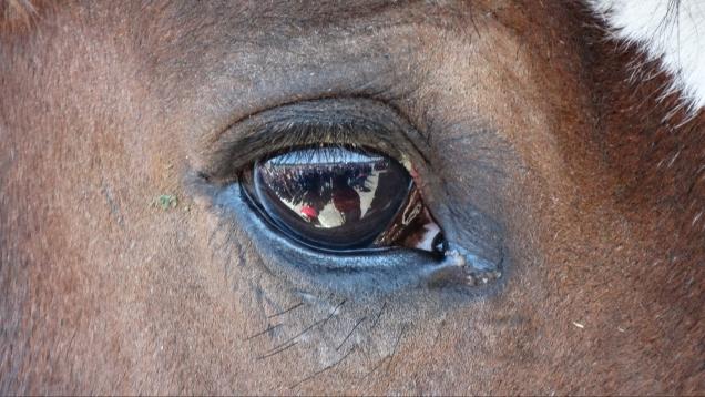 sunday-horses-0292.jpg